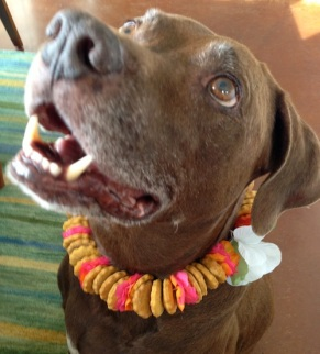 Heidi's Dog Snoopy Models the New Product - A Dog Treat Lei