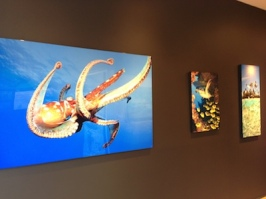 octopus photograph paia maui galllery