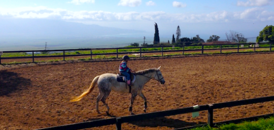 maui kula horseback riding lessons adults kids