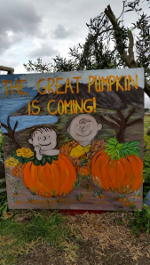 kula pumpkin picking 2014 when does it open