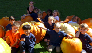 maui 2014 fall events calendar listing pumpkin patch