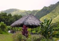 a traditional hawaiian hale