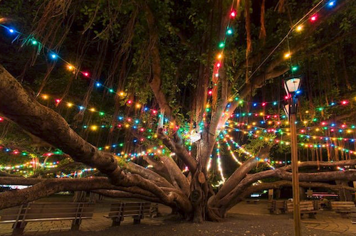 2014 Maui Tree Lighting Holiday Christmas Lights Tree