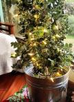 maui.live.christmas.tree