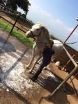 maui horse camp spring break 2015
