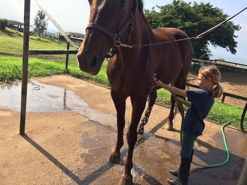 washing horses - maui horse camp spring break 2015