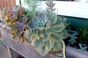 beautiful succulents