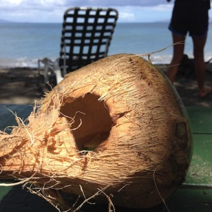 we literally put a lime in a coconut. and shook it all up